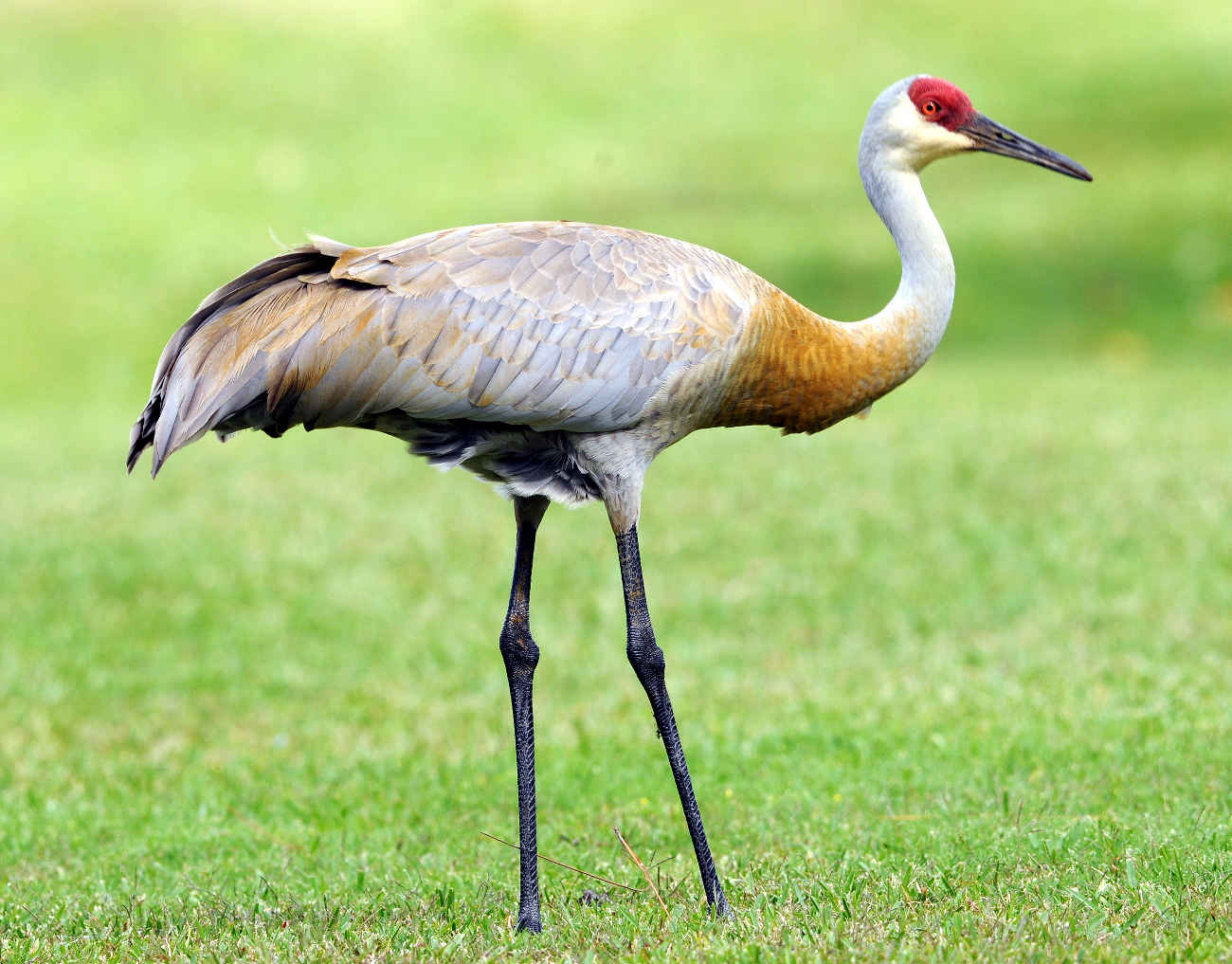 Crane bird images hdcrane